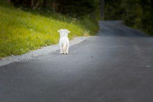 Hund ohne GPS Tracker
