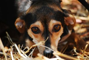 Hund aus dem Tierheim