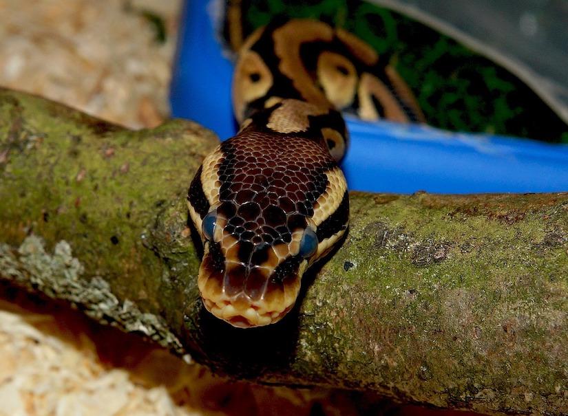 Artgerechte Haltung & Futter für Schlangen